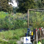 Our allotment in Henley, before Invesco Perpetual cleaned it up.